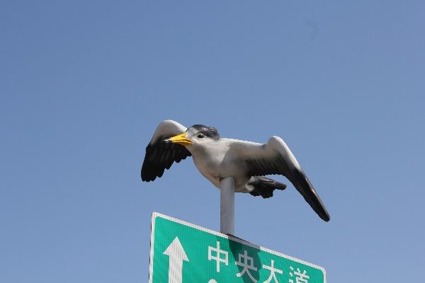 馬祖燕鷗_2